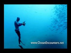 Freedivers plunge in for amazingly close great white shark encounters  By:Pete Thomas, GrindTV.com