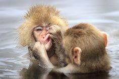 Dentist - Dental checkup at the monkey park. Animals And Pets, Baby Animals, Funny Animals, Cute Animals, Primates, Mammals, Animal 2, Mundo Animal, Beautiful Creatures