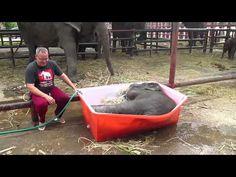 "Baby Elephant Bathing ""Double trouble"" - YouTube"