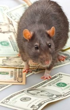 #wattpad #general-fiction RATS THAT BRINGS CASH AT THE SAME DAY +27785392928 Million ways of obtaining money in your pockets spiritually but these are the most secrets introduced by the powerful spiritual traditional healer in South Africa. I'm sure you're wondering how to attract money in your pocket?... can it really be a... Cute Rats, Attract Money, Make Money Now, South Africa, Fiction, Spirituality, Bring It On, Day, Healer