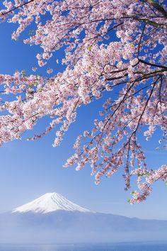 Sakura Mt. Fuji
