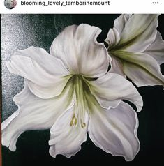 Flower Paintings, Oil Paintings, Tiger Lilies, Big Flowers, Lily, Gifts, Art, Classic Comics, Frames