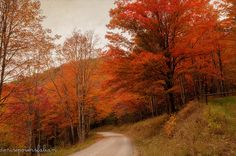 The Road to Spruce Knob Lake - Photo by Denise Powers Fabian