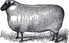 This is a wonderful Primitive Vintage Sheep Image! Shown above is another lovely Sheep image. This one shows a cute Sheep with white fur and a black face and legs. Primitive Sheep, Primitive Crafts, Primitive Fall, Graphics Fairy, Printable Animals, Printable Art, Printables, Sheep Illustration, Farm Images