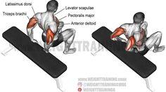 Bent-knee bench dip exercise