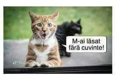 Haha, Funny Pictures, Humor, Quotes, Animals, Fanny Pics, Quotations, Animales, Animaux