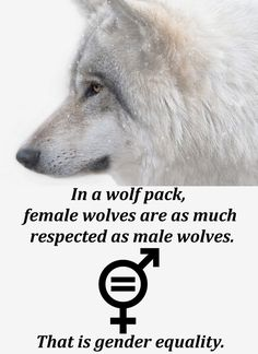 There is NO sexism in a wolf pack. Although, both genders fight their own gender over ranking positions, wolves see each other as equal individuals and work together as a team. Humanity however, still doesn't understand equality rights and continue to judge someone on something they can't change.