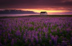 """""""Only In Dreams"""" by Ryan Buchanan on 500px  #Iceland"""