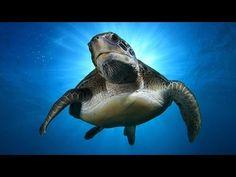 Stunning Clown Fish Aquarium & The Best Relax Music - 2 Hours - Sleep Music - HD 1080P - YouTube