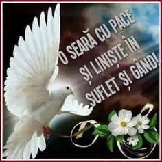 Optimism, Serenity, Good Night