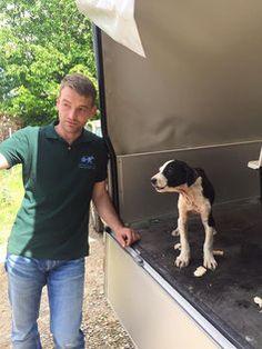 CNVR in Kosovo - StrayCoCo - im Einsatz für Strassenhunde
