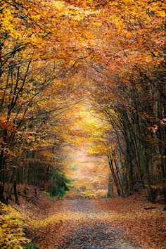 Autumn by Marco Schmidt on 500px