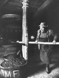 Man Using Old Wine Press at Vaux En Beauiplais Vineyard Photographic Print
