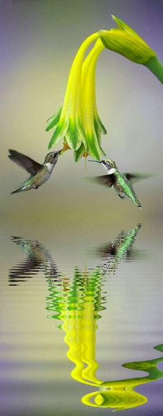 Hummingbird -- reflection