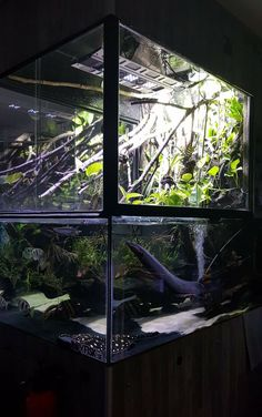 Aquarium Sharks, Aquarium Shop, Cichlid Aquarium, Aquarium Design, Snake Terrarium, Aquarium Terrarium, Outdoor Fish Tank, Oscar Fish, Monster Fishing