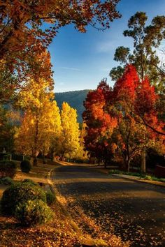 Autumn leaves falling like coins in place: Stock Photo - landscape Autumn Day, Autumn Leaves, Fall Trees, Autumn Song, Autumn Nature, Beautiful World, Beautiful Places, Beautiful Beautiful, Landscape Photography