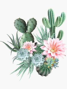 """""""succulent cactus pink flowers"""" Sticker by Collagedream Succulent Tattoo, Cactus Tattoo, Plant Tattoo, Cool Skull Drawings, Art Drawings For Kids, Cactus Art, Cactus Flower, Colorful Flowers, Pink Flowers"""