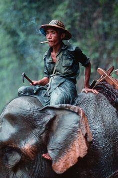 Burmese Mahout