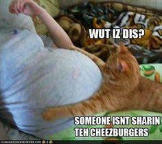 CheezBurgers funny animals cats - http://justhappyquotes.com/cheezburgers-funny-animals-cats/