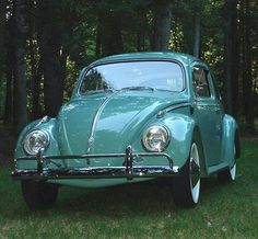 Image result for colors of 73 bug