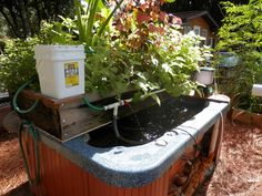 Marc's hot-tub aquaponics. Community member shared this system on our FB page.