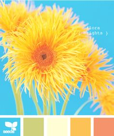 sunflower color swatch