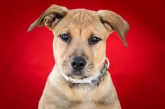 Smartest pup in the shelter returned shortly after being adopted.  Located at Baldwin Park AC.