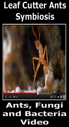 A neat video about the symbiosis (mutualism) between leaf cutter ants, cultivated fungus, and bacteria. It's also narrated by Liam Neeson if you're a fan. -enjoy! Science from Murf LLC