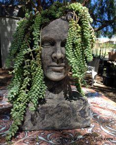 Visit this local gem.  Green Man at Serra Gardens Landscape Succulents, Fallbrook CA.