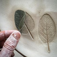 From the veggie patch and straight into clay, Sage leaf platter #sage #organicgardening #fromtheveggiepatch