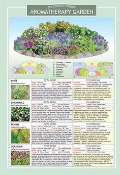 Milk and Honey Inc. - Aromatherapy Garden Chart #gardenplans