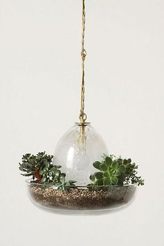 Indoor Garden Lamp Vicky pendant lamp terrarium shines a light on indoor gardening terrarium pendant lamp by anthropologie workwithnaturefo