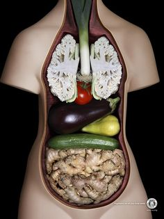 """""""Vegetales es todo lo que tu cuerpo necesita"""". La anatomía humana al natural! Ahora cada vez que coma peras recordaré mi páncreas!"""