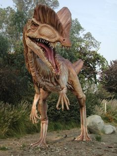 Dilophosaurus, a theropod dinosaur from the Early Jurassic Period, about 193 Ma. Weight: about 1000-lb - Length: about 20-ft from head to tail. The first specimens were found in Arizona
