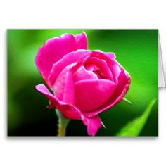 Rosy Pink Cards