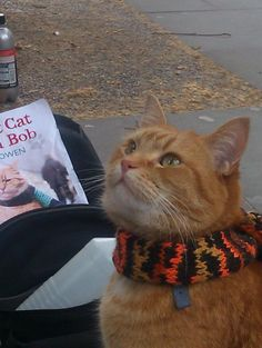 A Street Cat Named Bob and the amazing  history of cats.
