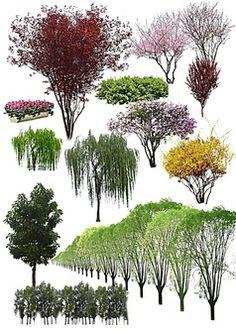 城市园林建设树木psd素材