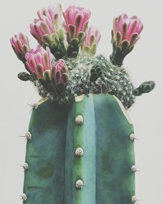 cacti 10 . . #inspo #atmosphere #instagood #instamood #aesthetic #aesthetics #mood #vibes #vintage #colours #colors #hipster #photography #cactus #cacti #plant #plants #nature #cactuslover #plantlover #naturelover #naturelovers #grow #growth #growing #life #live #love #happy #happiness