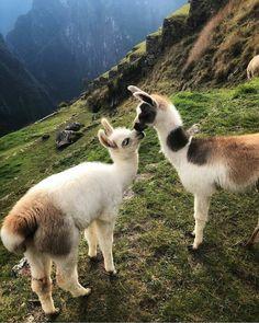 Peru travel   Packing list   Backpacking   Guide   Itinerary   Machu Picchu   Rainbow Mountain   Huacachina   Cusco   Peru tips   Llamas