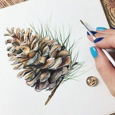 Winters Find - pinecones - by JanGuarino - Etsy Watercolor Cards, Watercolour Painting, Watercolor Flowers, Painting & Drawing, Watercolors, Botanical Art, Botanical Illustration, Watercolor Illustration, Christmas Paintings