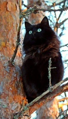 This kitty looks like a blue eyed owl sitting in that tree!