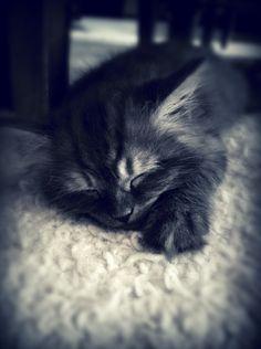 5 weeks old, Odin