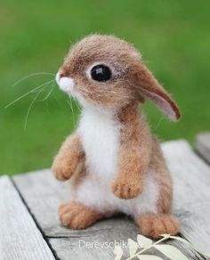 kleine Tiere Baby Janie the Little Rabbit is domesticated and very affectionate. Needle Felted Animals, Felt Animals, Animals And Pets, Funny Animals, Needle Felting, Cute Baby Bunnies, Cute Babies, Baby Animals Pictures, Felt Baby