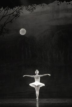Moonlight Ballet                                                                                                                                                      More