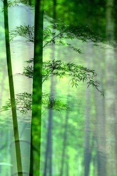 Bamboo  http://calgary.isgreen.ca/