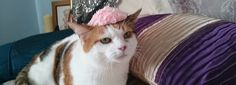 Doesn't Holly look ready for spring in her pale pink rose hat?