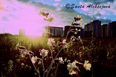 Summer breeze  Fine Art Photography  Digital by BlossomingDream, $5.00