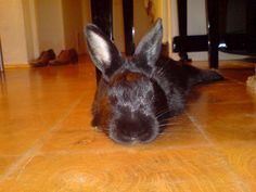 relaxing rabbit... Entspannung pur