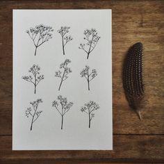 gypsophila babys breath flower illustration a4 print of original drawing