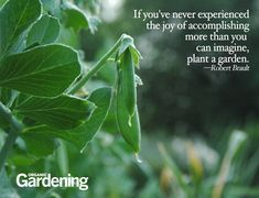 Tips for high yield gardens!